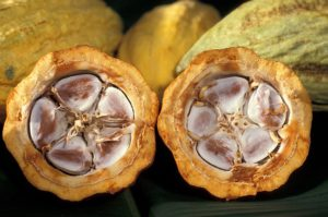 Cocoa butter is found in many cosmetic products