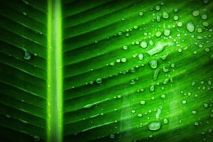 Spirulina has many health benefits
